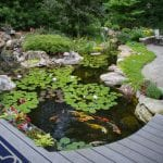 Ponds in Jonesborough, Tennessee